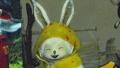 "『PSO2』9月上旬のアップデート""追憶の熱砂""情報も公開された""ファンタシースター感謝祭2013""決勝大会レポート"
