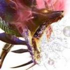 """『モンハンクロス』黒い蒸気を纏う危険な""""獰猛化モンスター""""とは。足湯が人気の""""ユクモ村""""も紹介"""