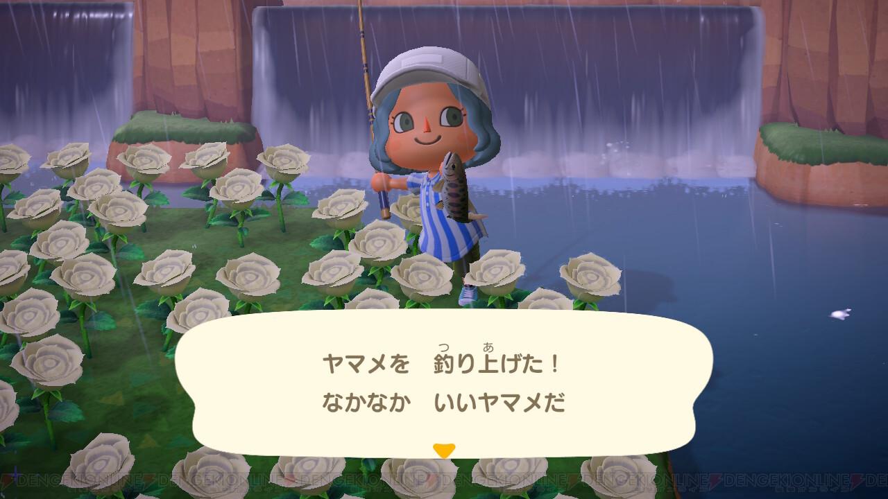 あつ森 7月魚